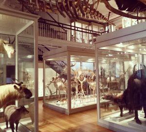 harvard history museum